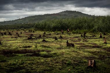 O desmatamento é um processo de elevado impacto ambiental