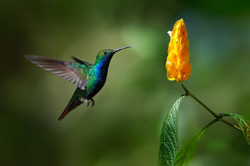 O termo flora normalmente é usado para designar o conjunto de plantas de uma região. Já o terno fauna refere-se aos animais