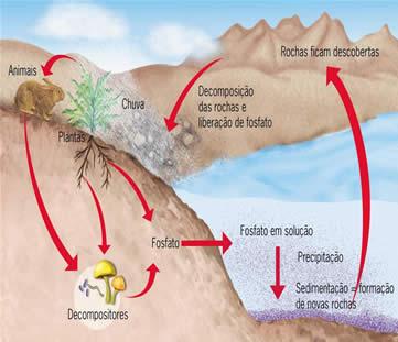 O ciclo do elemento químico fósforo.