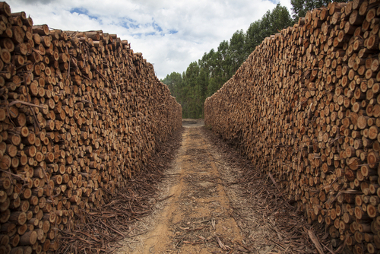 A exploração da madeira é um exemplo da utilização dos recursos naturais