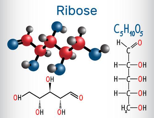 A ribose apresenta diastereoisômeros por apresentar mais de um carbono quiral