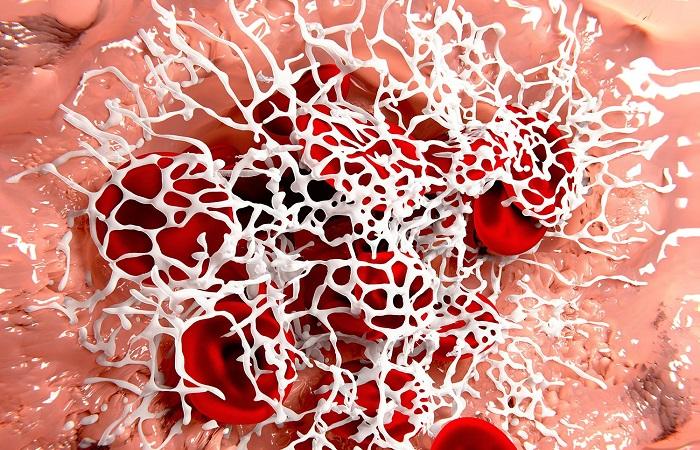 Observe o coágulo formado por uma malha de fios de fibrina