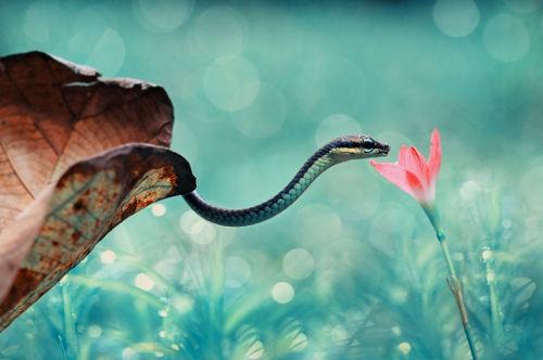 As cobras são organismos eucariontes, portanto, estão agrupadas no domínio Eukarya