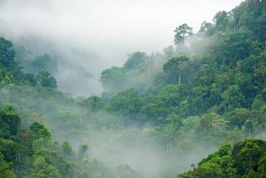 A vegetação influencia nas temperaturas e no regime de chuvas