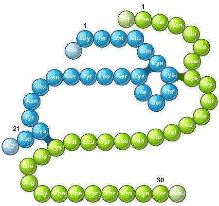 A insulina é formada pela ligação peptídica entre vários aminoácidos