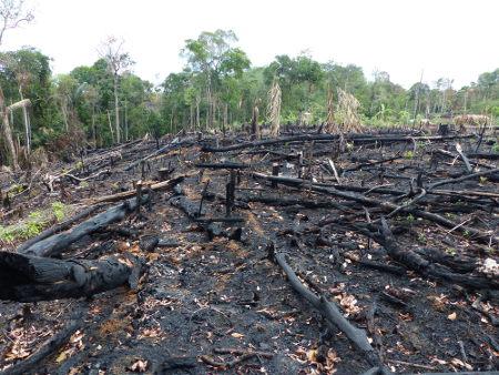 A queimada é um importante problema ambiental brasileiro