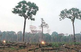 Grande parte da floresta desmatada é usada pela atividade agropecuária na região Norte.