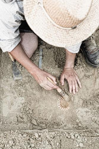 Os fósseis são uma importante evidência da evolução