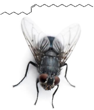 O isômero (Z)-9-tricoseno é o feromônio da mosca doméstica que atrai os machos. Já o isômero (E)-9-tricoseno não possui nenhum efeito