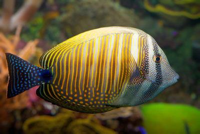 Os peixes apresentam mecanismos que garantem a regulação da quantidade de sais em seu corpo
