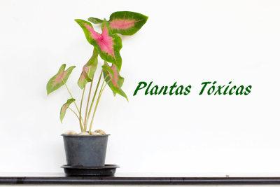 Plantas T Xicas Mundo Educa O