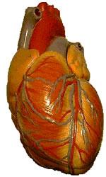 Insuficiência de oxigênio no coração