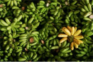 O eteno é produzido pelas bananas para provocar o seu amadurecimento