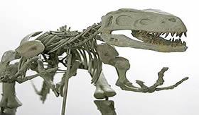 Fóssil de um Dinossauro Rex.