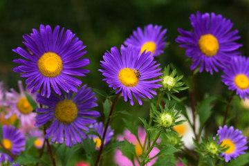 A inflorescência encontrada na família Asteraceae é conhecida como capítulo