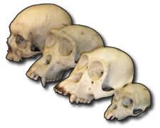 A gênese das espécies: aproximação ou distinção de características.