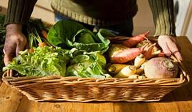 Verduras livres de agrotóxicos.