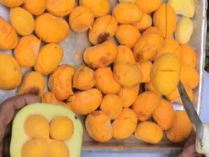 Coletas de frutos nativos como o pequi é uma forma de desenvolvimento sustentável, pois produz renda e preservação.