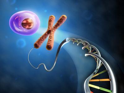 Os cromossomos são fios de DNA associados a proteínas