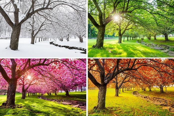As estações do ano representam quatro diferentes períodos ao longo de um ano.