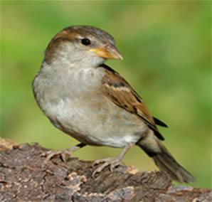 A origem das aves e características adaptadas ao vôo.