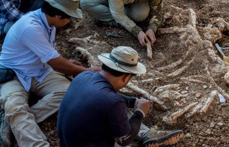 O paleontólogo preocupa-se com o estudo dos fósseis