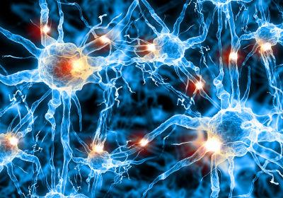 O impulso nervoso passa pelas membranas dos neurônios e propaga-se ao longo dessas células