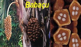 A N-parafina é retirada do óleo de babaçu.