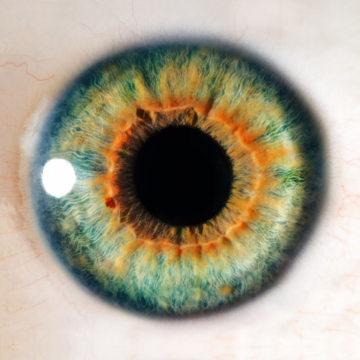 O olho é o órgão responsável pela visão