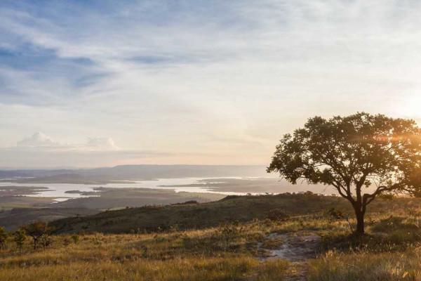 Rico em biodiversidade, o bioma Cerrado é a segunda maior formação vegetal do Brasil.