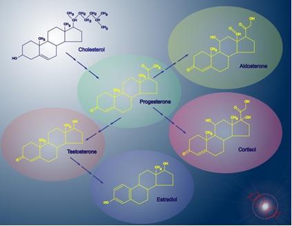 Moléculas de alguns esteroides importantes. Observe que todos possuem o mesmo núcleo básico