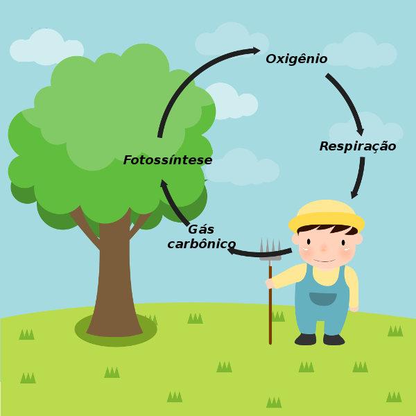 O ciclo do oxigênio apresenta relação direta com o ciclo do carbono.