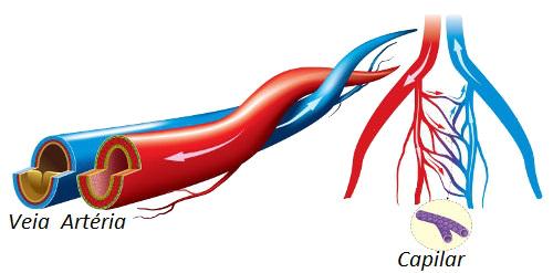 Diferenças entre artérias, veias e capilares