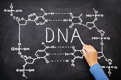 O DNA é um acido nucleico que se relaciona com a hereditariedade