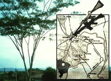 A Guerrilha do Araguaia optou pela luta armada como meio de combate à Ditadura Militar.