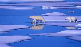 Nos pólos o gelo funciona como protetor da vida aquática.