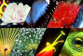 As cores da biodiversidade.