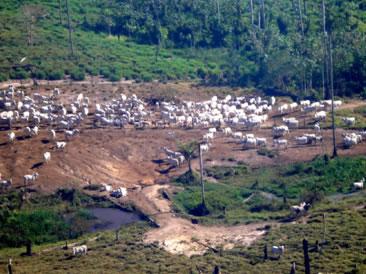 O desmatamento é um dos grandes problemas ambientais provocados pela agropecuária