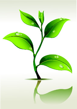 A auxina está relacionada com a dominância apical em uma planta