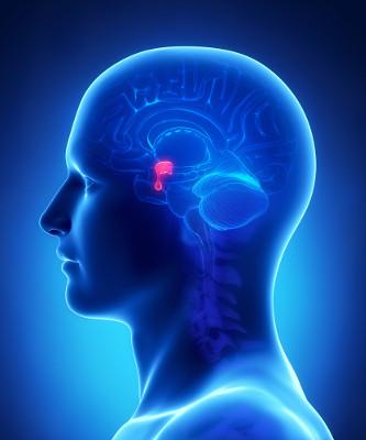 Os tumores da hipófise são benignos e estão localizados na glândula hipófise
