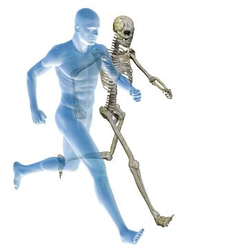 Entre as funções exercidas pelo sistema esquelético, podemos destacar o auxílio no movimento do nosso corpo
