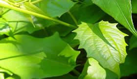 Pigmentação verde das plantas: presença de magnésio.