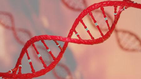 Entender os conceitos básicos de Genética ajuda-nos a resolver atividades relacionadas a essa área