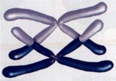 Ligações Gênicas