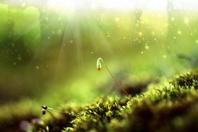 Os musgos são as briófitas mais conhecidas
