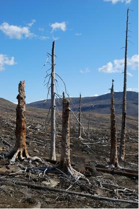Os óxidos ácidos são os grandes responsáveis pela chuva ácida que destrói florestas