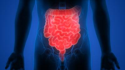 Os intestinos são mantidos conectados à cavidade abdominal pelo mesentério