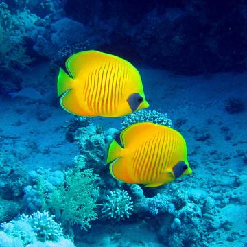 Os peixes são animais exclusivamente aquáticos que apresentam respiração branquial