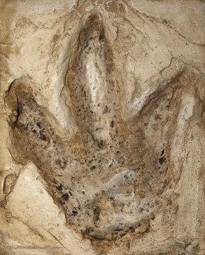 As pegadas são exemplos de icnofósseis
