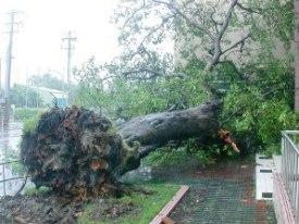 Tempestades derrubam árvores em cidades e no campo.